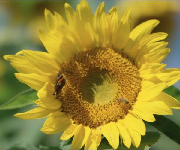 celebrating-beekeepers-thumb